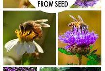 Beekeeping For Beginners / Beekeeping For Beginners, Beekeeper, Backyard Beekeeping, Beekeeping