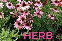 Herbs / Herbs, Herb Gardens, Herb Garden Ideas