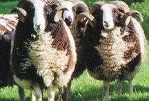 Farm Animals / Farm Animals, Chickens, Rabbits, Goats. Farm pets for the homestead.
