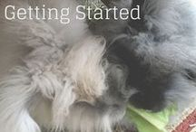 Rabbits / Rabbits in the homestead, Angora Rabbits for Wool Fiber,  Rabbits for Meat.