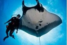 Bali Diving / Dive into deep on http://balitravelshop.com/Tour-Category/Diving-Bali