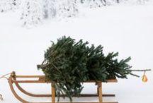 L'échoppe décore le sapin / Le roi des forêts aura toujours une place de choix dans le salon à l'arrivée des fêtes de fin d'année. Ces aiguilles et son odeur d'épicéa viennent embaumée le salon. Il est l'heure de décorer le sapin de Noël de la tête au pied.
