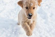 Dachshund Through The Snow / Keep your pet warm during these colder seasons. We know they love snow.