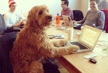 Take Your Dog To Work Day / Everybody loves these days! Makes the place so much happier.