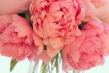 Entertaining - Favorite Flowers