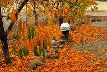 Fall / by Teresa Andersen