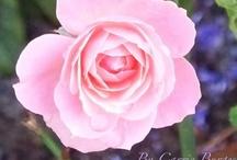 garden love / by Sue Northcross