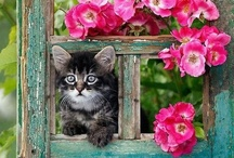 Cat at Window / by Black Peony