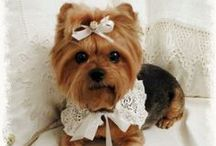 Yorkie Yorkshire Terrier Love / All things sweet and Yorkie...  Dedicated to my Miss Mollie who came into our lives in 2003~