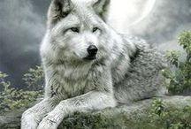 Amores❤ / En este tablero encontraréis todo lo que guardo sobre lobos.
