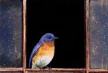 birds / by Beata Ce