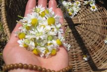 n a t u r a l~t h e r a p i e s / natural therapies and remedies for illness and common ailments / by Belleviolette Rubyrose