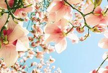 Seasons & Holidays / by Libby Scott