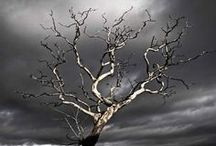 Dead trees / by Heather Wayman