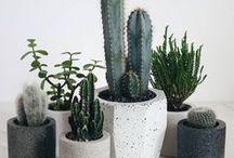 H O M E • Plants
