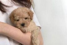 pupss*