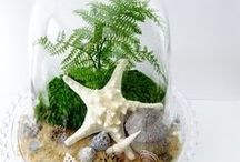 Beachy Chic Decorating... / This is my ideal decorating style - beachy, dark wood, whites, greys, pebbles, driftwood, glass, nature, candles, flowers, and shells, lots of shells. Of course my actual decorating style includes piles of washing, stacks of magazines, stuff to be recycled falling all over the place, and shells attract an unbelievable amount of dust.. still this is Pinterest ..where a girl can dream, / by Meredith Knight