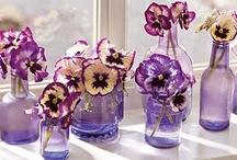 Purple, Purple, and More Purple! / by Valerie Herman