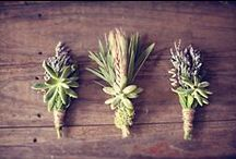 Wedding Inspiration: Boutonnieres / by Chelsey Somohano