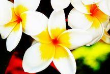 Exquisite Flowers