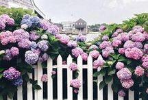 Decorating | Outdoors / gardens, patios & balcony's