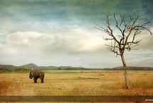 Minneriya National Park / by Secret Lanka