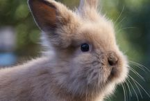 Fluffy creatures / All sorts of lovely and fluffy creatures (especially bunnies)
