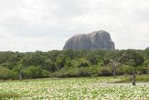 Elephant Rock, Yala, Sri Lanka / by Secret Lanka