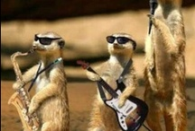 Musical Pets / Do your pets play music? Maybe they just dance to it? Here's some rockin' animals!