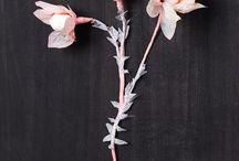 Paper Flowers / DIY Paper flowers, crepe paper flowers. / by Katey Nicosia