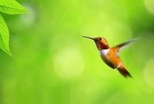 Hummingbirds / by arc 360