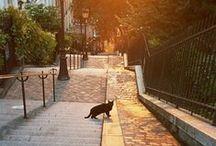 Paris*my secret life*en été / by aga parker