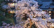 Japanese graden 日本庭園 / 会津東山温泉向瀧の中庭の写真