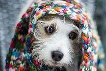 cute animals / by Jen Brockett
