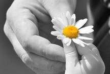 Floral ❀❀ ❀