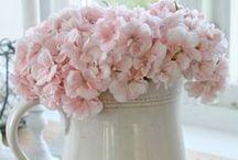 Flowers... / love it <3 <3
