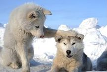 K9 / Wolf wolves dawgs dogs beasts canines and their progenitors