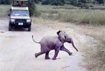 Elephants / by Claire Jensen