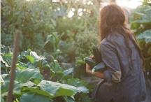 green/garden/outdoors / by Mia Ålund