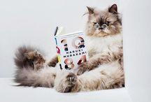 Literary Cats