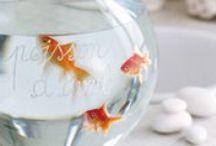 Fish oh Fish / by Virginie Bichet