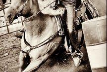 Horses &Tack! / by Maddy Ebeling