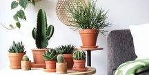 Green plants & interiors / green plans and interiors storage