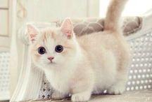 Cute/Funny Animal Stuff