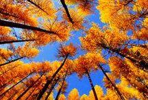 Autumn / Fall / I love, love, love autumn/fall!