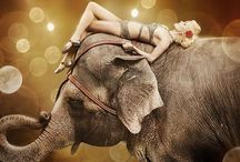 Circus ART / Circus related art and photography  / by Jana Robison