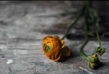 happy flowers / by Christelle Landy