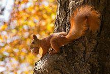Autumn--my favorite Season
