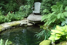 Dream Pools / Pools, Ponds, & Water Features   / by Babe in the Woods