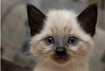 Kitties are the BEST!!!!!